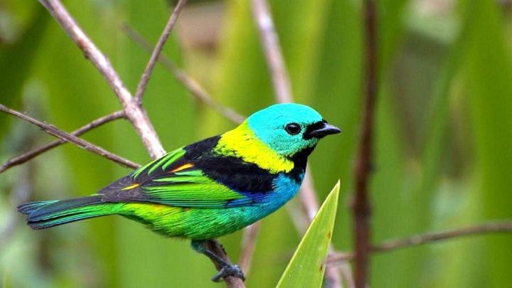 pankajam-bird