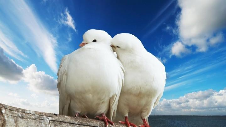 shail-bird