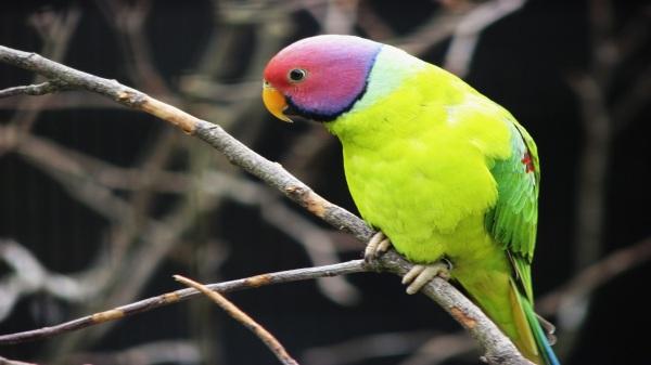 siva-bird